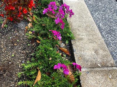 社屋前の花壇